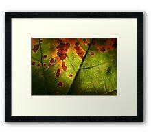 Leaf Framed Print