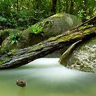 Mossman Gorge  Mossman  Queensland by William Bullimore