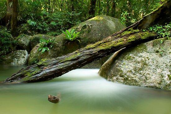 Mossman Gorge • Mossman • Queensland by William Bullimore