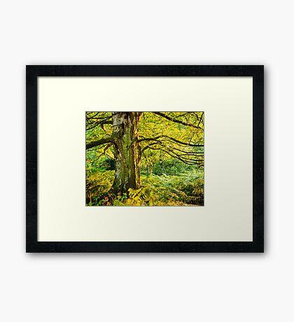 Summer Woodland Framed Print
