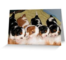Cavalier Puppies at the Milk Bar  Greeting Card