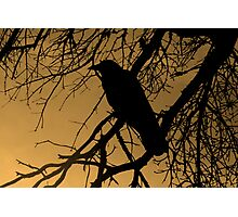 Creepy Crow Photographic Print