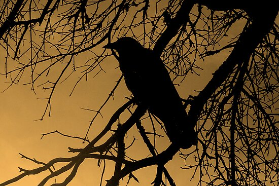 Creepy Crow by Darlene Ruhs