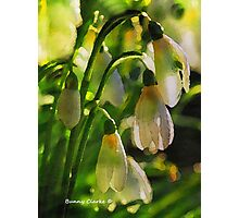 Harbingers of Spring Photographic Print