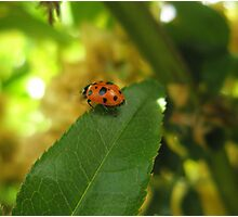 Little Bug Photographic Print