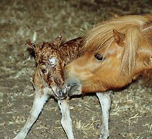 Mare with New Born Foal by Jenny Brice