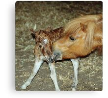 Mare with New Born Foal Canvas Print