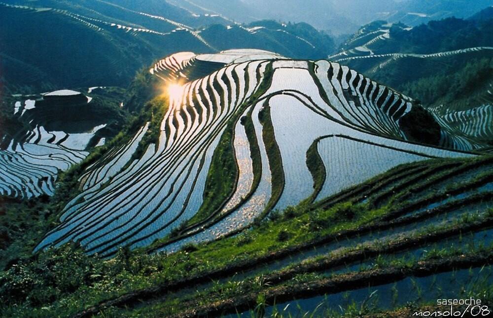 Rice Terraces 2(Banaue,Phil.) by saseoche