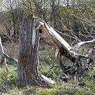 Bowing Tree by tkrosevear