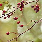 red berries by SylviaCook