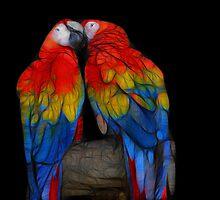 Fractal Macaws by Teresa Zieba