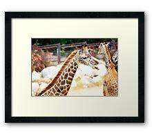 Silly Giraffe Framed Print