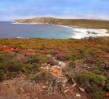 Wildflower season on the coast by georgieboy98