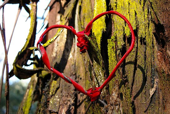 In the Heart of the Forest - romantic trees and ribbon heart photograph by CDCcreative