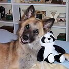 Cody and his Pal the Panda by Terri~Lynn Bealle