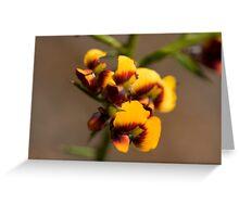 Gorse Bitter Pea (Daviesia ulicifolia) Greeting Card
