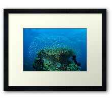 Coral head Framed Print