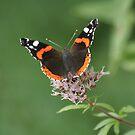 Butterfly at Rest by Pamela Jayne Smith