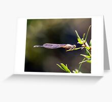 Dragonfly Vertical Greeting Card