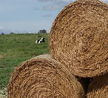 Hay Bails and Cow by Sharon Robertson