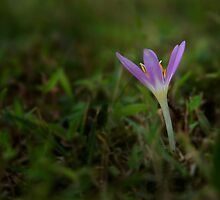 There's always another spring by Antoine Khater