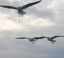 Gulls squadron by Fran0723