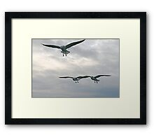 Gulls squadron Framed Print