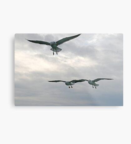 Gulls squadron Metal Print
