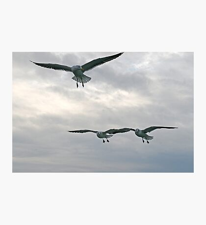 Gulls squadron Photographic Print