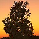 A Glorious Sunset by Terri~Lynn Bealle