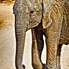Baby Elephant Walking by Scott Ward