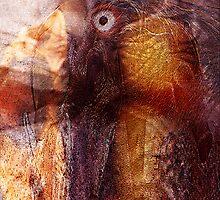 Bird's Eye by Tom Romeo
