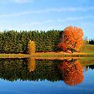 The Orange Tree by BigD