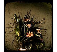 Remembrance Photographic Print