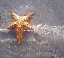 Starfish by Kreardon