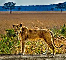 African Animals by Scott Ward