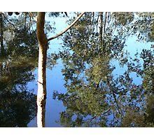 Saturday Garden Pond Photographic Print