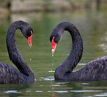 Black Heart by Krys Bailey