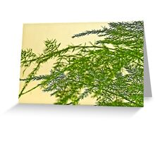 Florist Fern Macro  Greeting Card