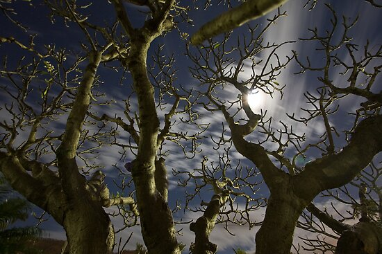 Spooky Frangipani • Townsville • Queensland by William Bullimore