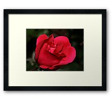 Knock-Out-Rose II Framed Print