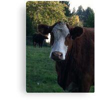 Oregon Cow Canvas Print