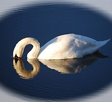 The Swan by WJPhotography