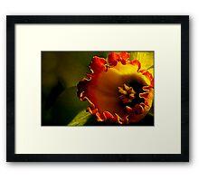 Untitled.00117 Framed Print