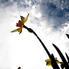 Dragonfly (Daffodil) by discoden