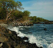 Rugged Maui Coastline by Stephen Vecchiotti