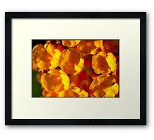 Untitled.00094 Framed Print
