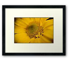 Untitled.00068 Framed Print