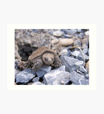 Emerging Snapping Turtle Art Print
