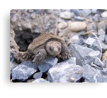 Emerging Snapping Turtle Metal Print